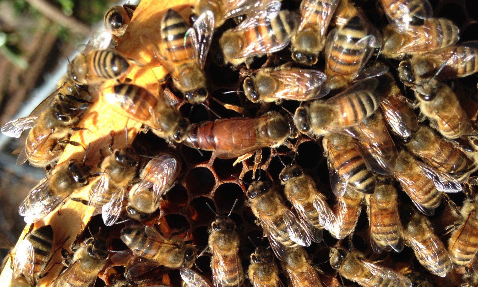 All American Bee Company